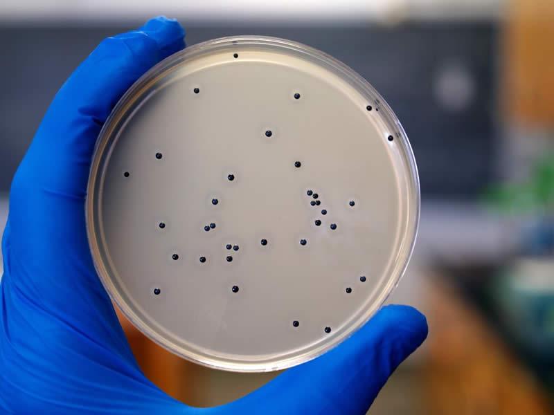 Staphylococcus-spp