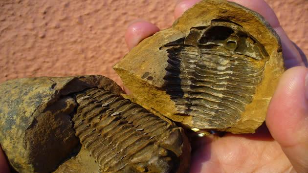 Molde exterior fósil