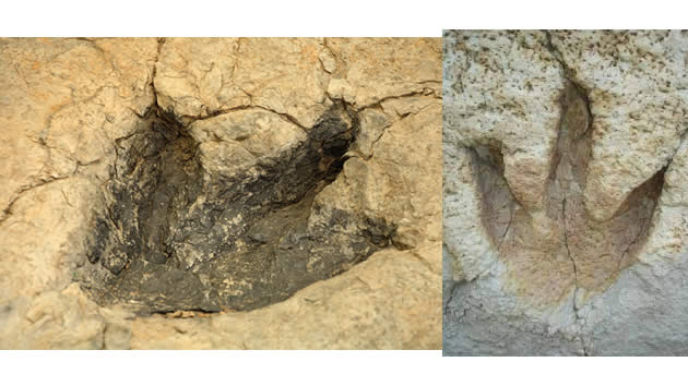 huellas fosiles