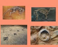¿Que son y cómo se forma los fósiles?
