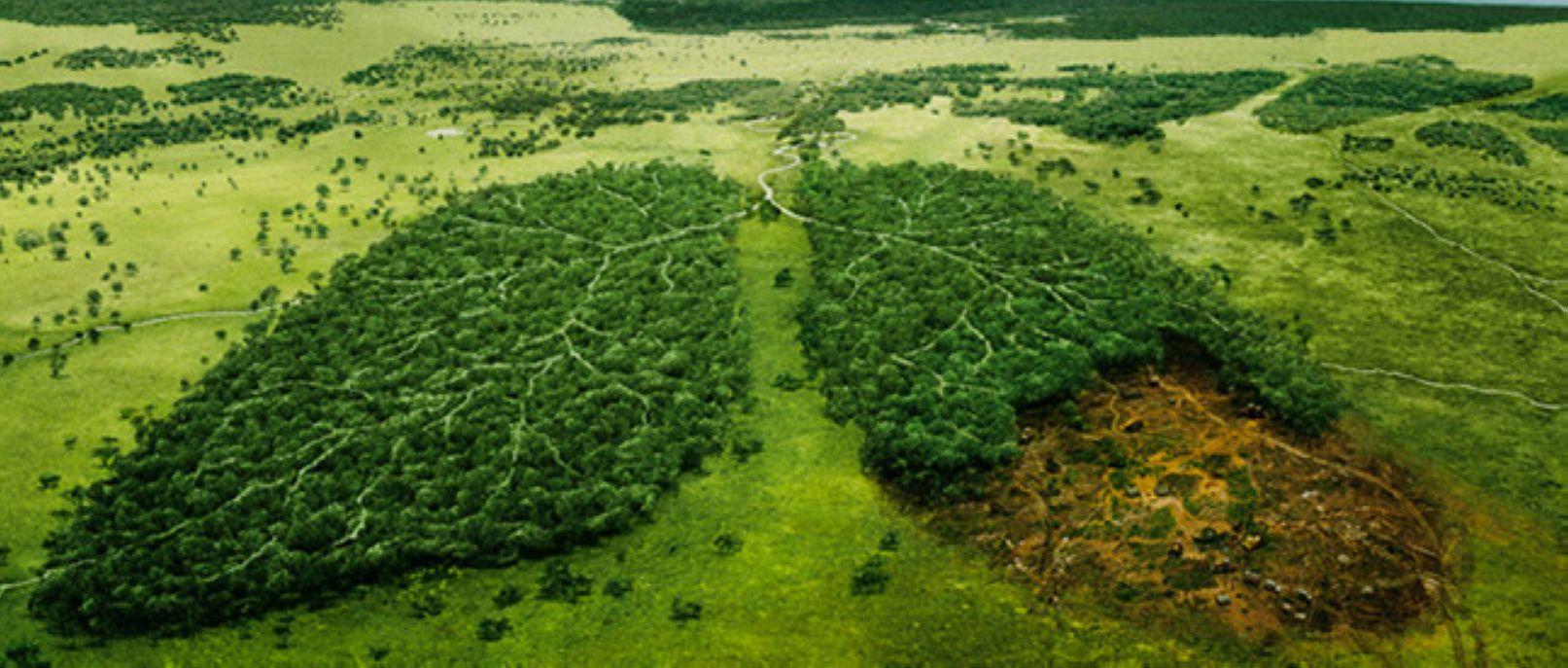 Desastres naturales que están arrasando el planeta